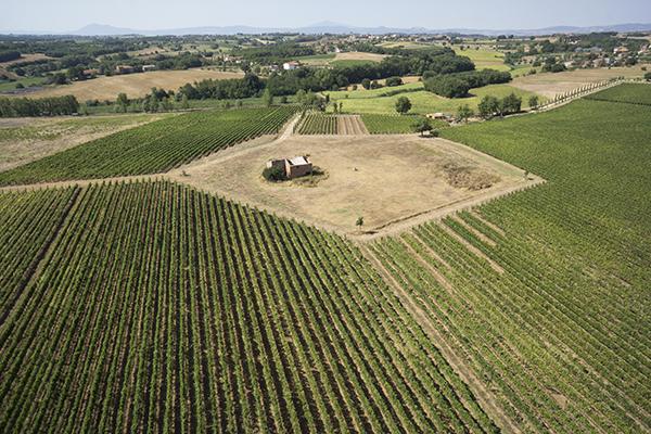 aziende-vinicola-cortona-leuta-tuscany